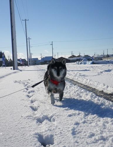 雪積もったよ~