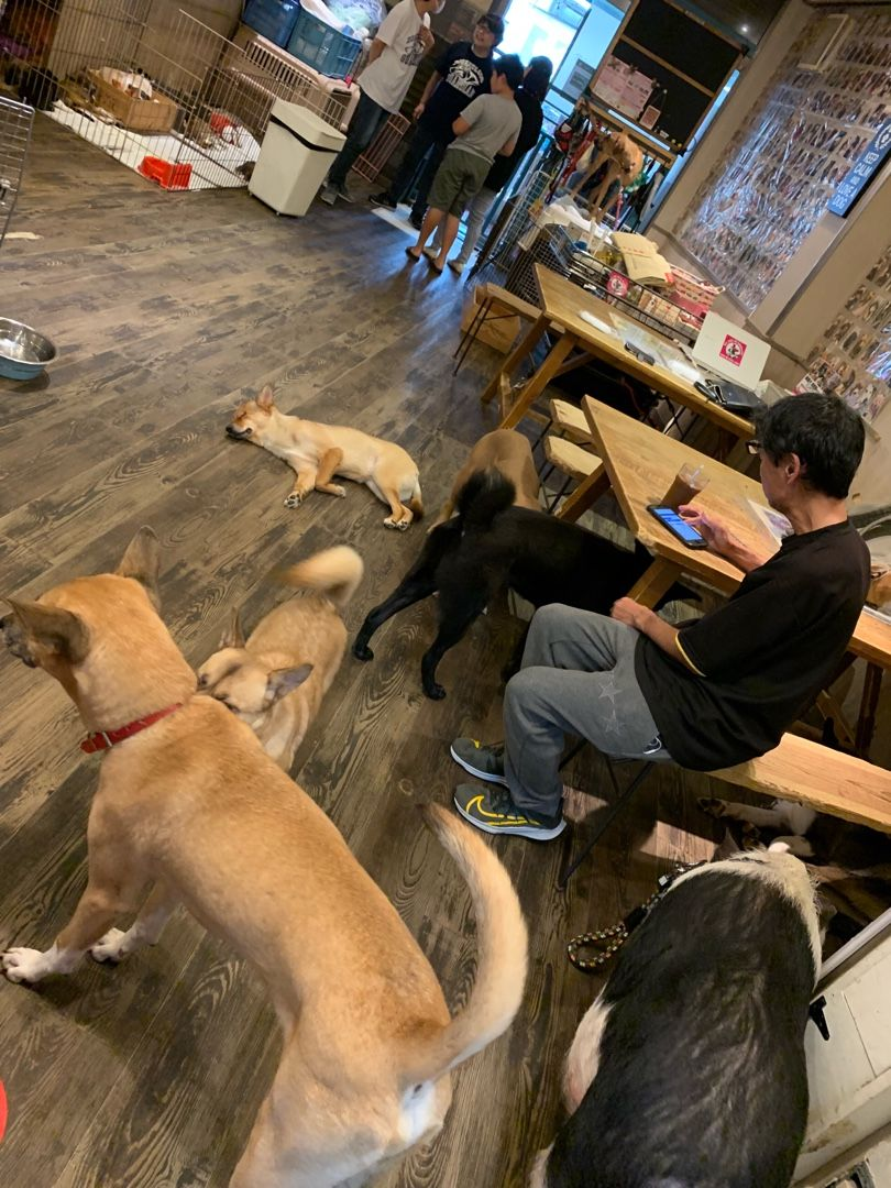 犬 神戸 保護