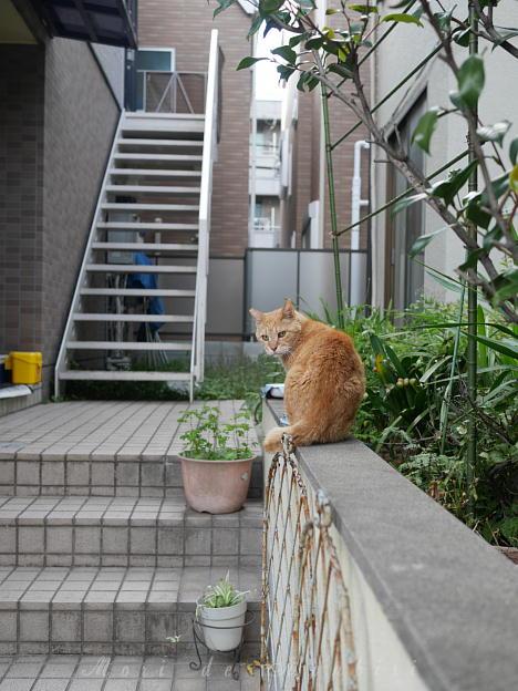 見返り猫2017.11.11