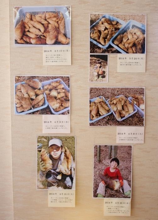 筍写真1~6.jpg