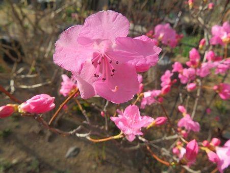 やさしい花の咲く場所