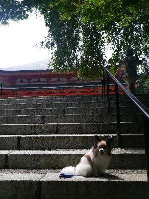 2012京都夏2−21.JPG