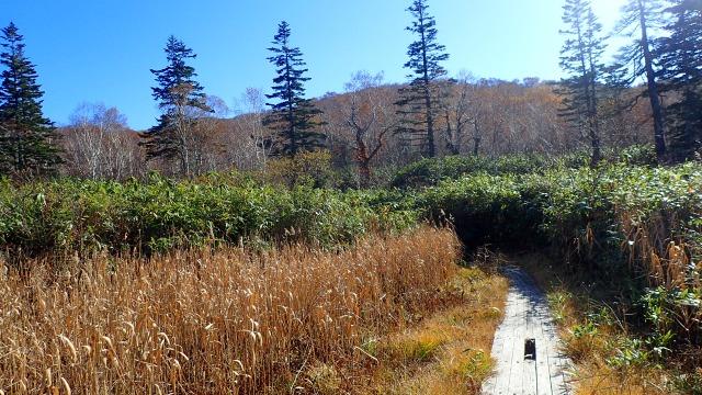 PA191370 12:54樹林に入る.jpg