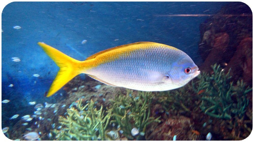 九州 台風一過の青空☀主なニュース サンゴ礁 魚 水族館 その10