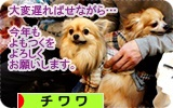 banner yomotsuku2014.JPG