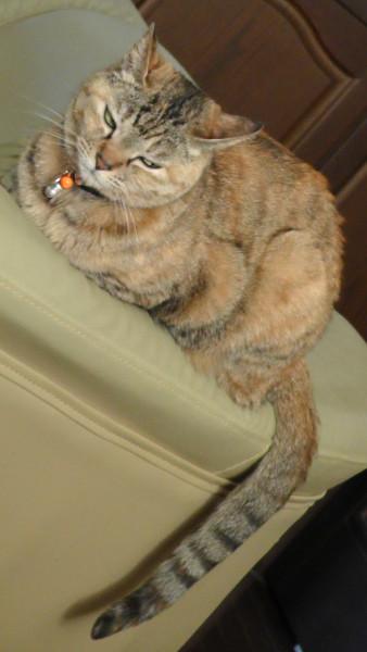 嫌そうな表情の猫 ねこ ネコ CAT