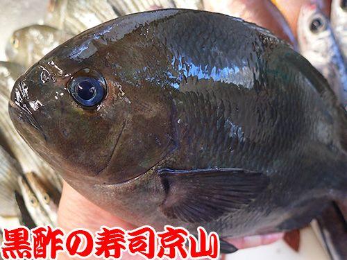 江戸川区一之江まで新鮮美味しいお寿司をお届けします