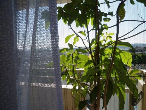 5カーテン洗い 出窓500.jpg