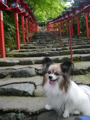 2012京都夏3−14.JPG