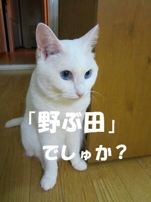 IMG_3017.jpg