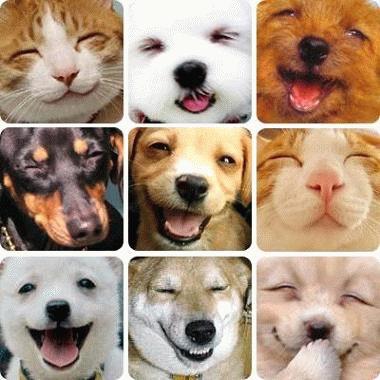 笑顔の動物たち