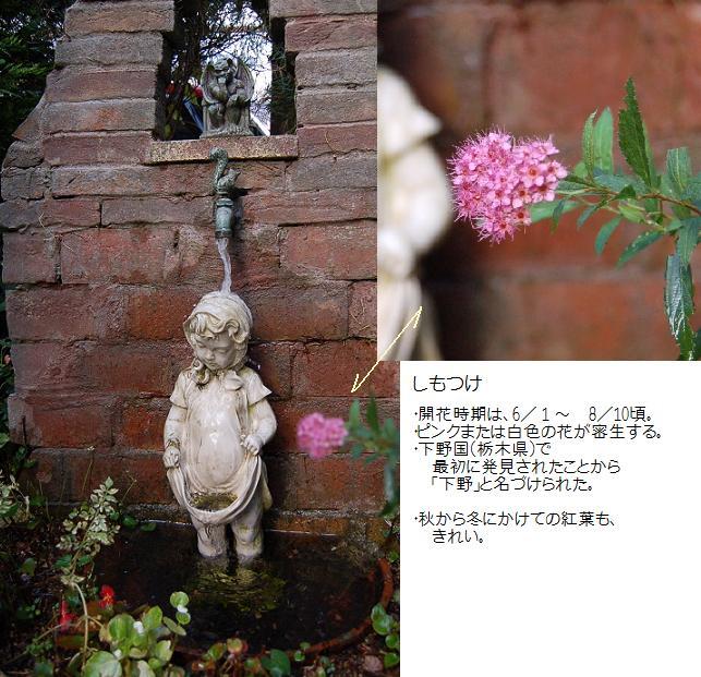 DSC_0058.JPG