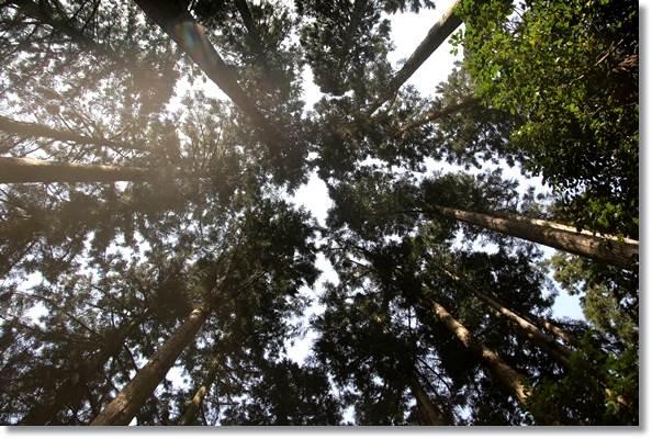樹木公園-52 16.4.9