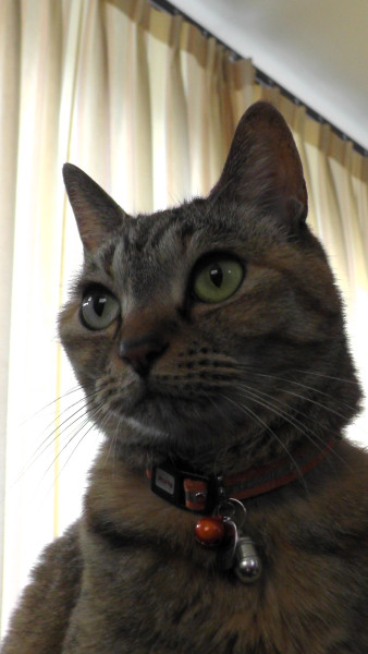 猫 ねこ ネコ CAT