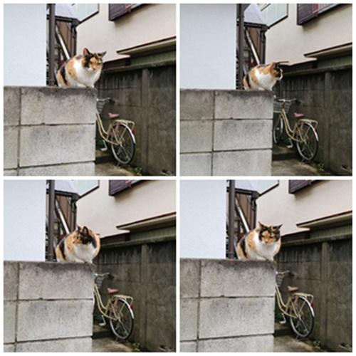 猫4体.jpg