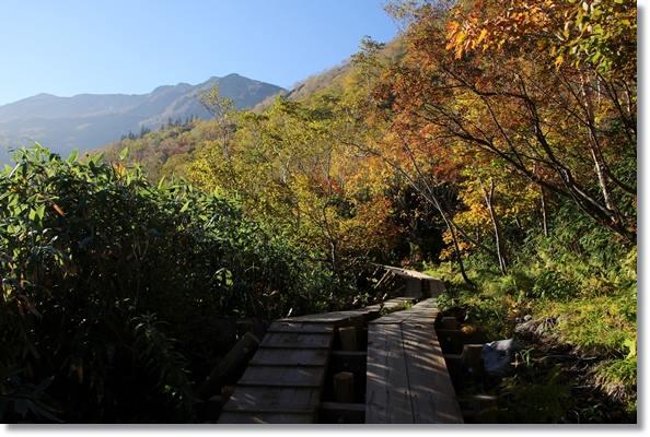 栂池自然園-32 15.10.2