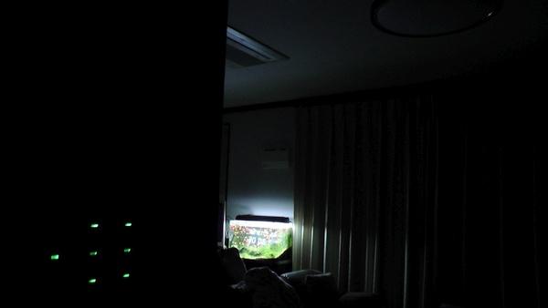 24時間点灯している熱帯魚水槽の照明 20W×1灯