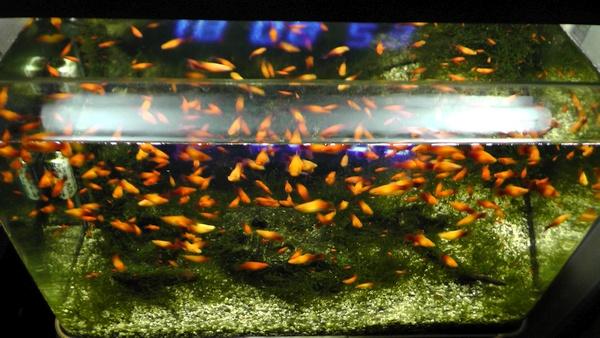 偏光フィルターの効果を最大にしたときの水面に反射する蛍光灯