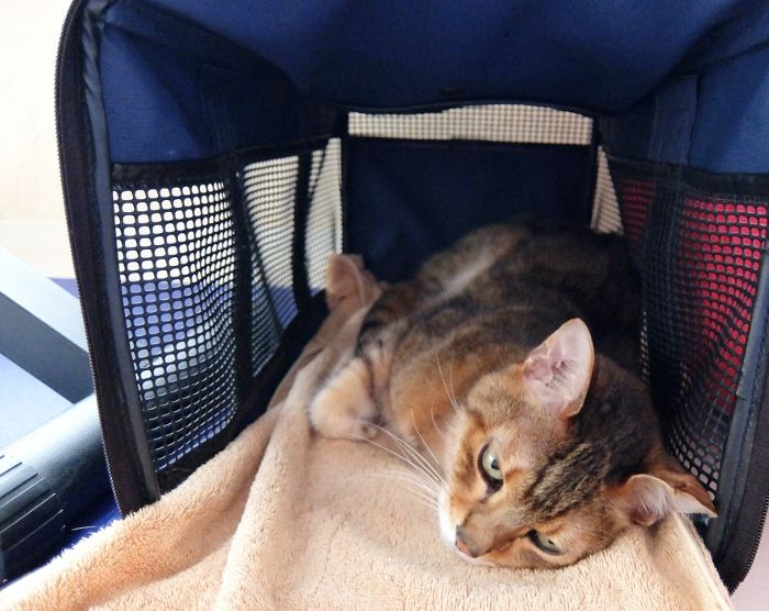 猫の血便としぶり腹 下痢 腸炎 消化器 リンパ腫