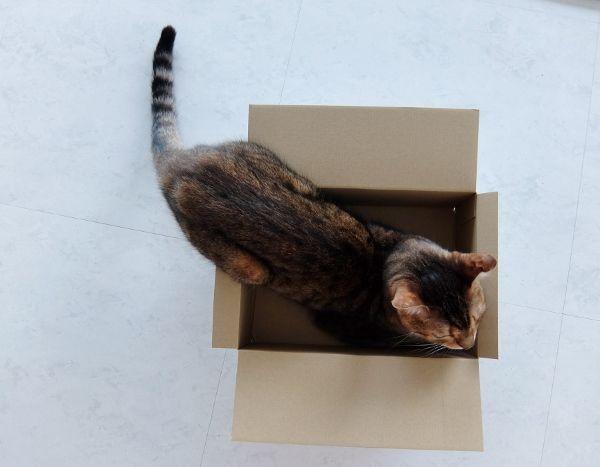 猫 箱 入る 理由 意味