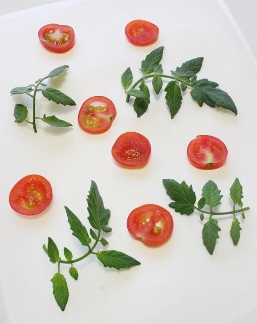 ミニトマト押します。 .jpg