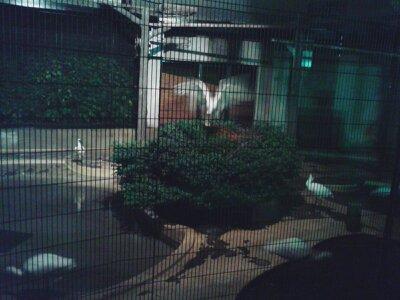 ナイトのげやま鳥2013年8月