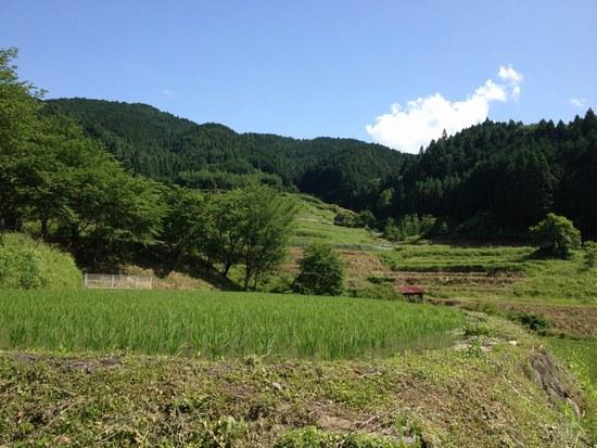 1水田風景5501.jpg