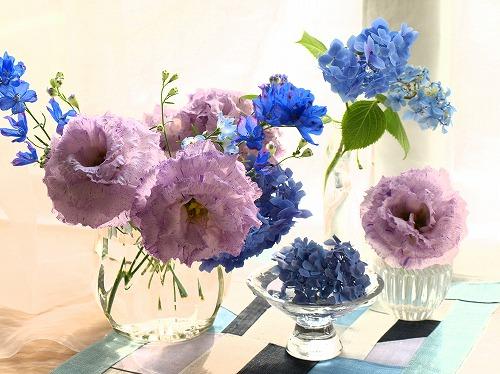 H24.6-蝉しぐれ&紫陽花.jpg
