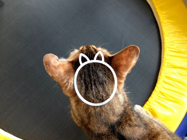 猫 ねこ 輪ゴム ゴム 猫型ゴム