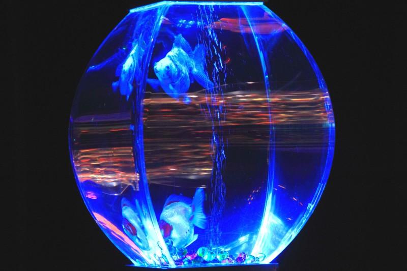 アートアクアリウム展_004.jpg