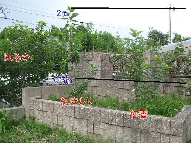 004-A.jpg