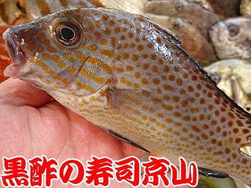 コロダイ 寿司 出前 未利用魚