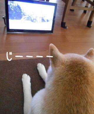 0621テレビ.jpg