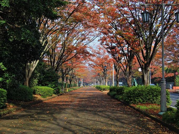 2.公園北路のケヤキ並木.JPG