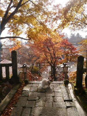 2012軽井沢9.JPG
