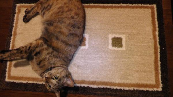 玄関マットと猫