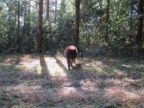 続けて出猟 | 猟犬・愛犬 - 楽天ブログ