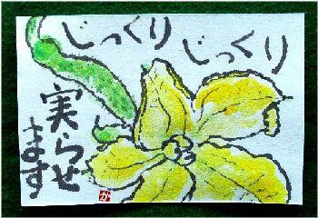 きゅうりの花 1