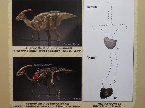 大阪市立自然史博物館2017年4月下旬17 ハドロサウルス類