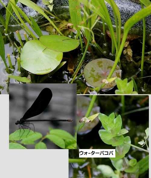 2014_0714_123329-IMG_3225.JPG