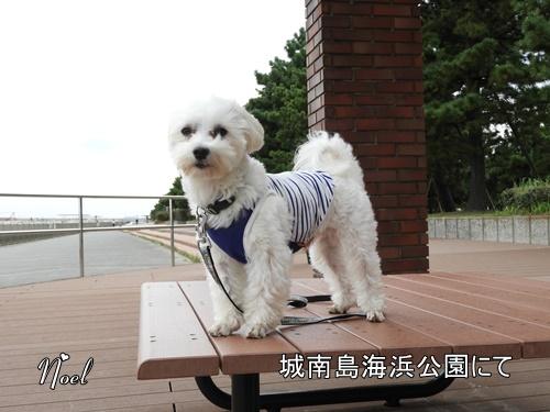 城南島海浜公園にて