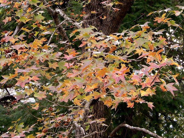 シアトルの森18