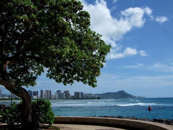 ハワイ コンドミニアム ホテル エクゼクティブセンター Executive Centre Hotel