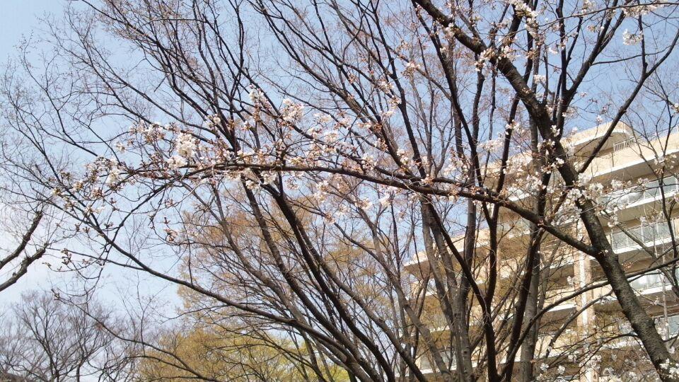 0324 新金岡公園春祭り2