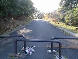 20130103 貝塚山緑地2