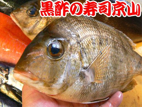 葛飾区 寿司 出前 東立石.jpg