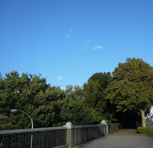 青い空と木.jpg