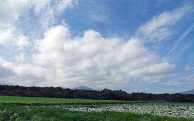 10月秋のキャベツと空