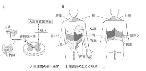 痛み 右 背中 背中が痛む!痛む場所ごとに図で見る14の原因:肩こり?それとも他の病気?