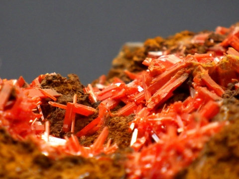 大阪市立自然史博物館2017年4月下旬4 紅鉛鉱(Crocoite) オーストラリア